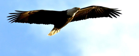 You Are An Eagle